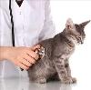 Ветеринарные клиники в Полесске